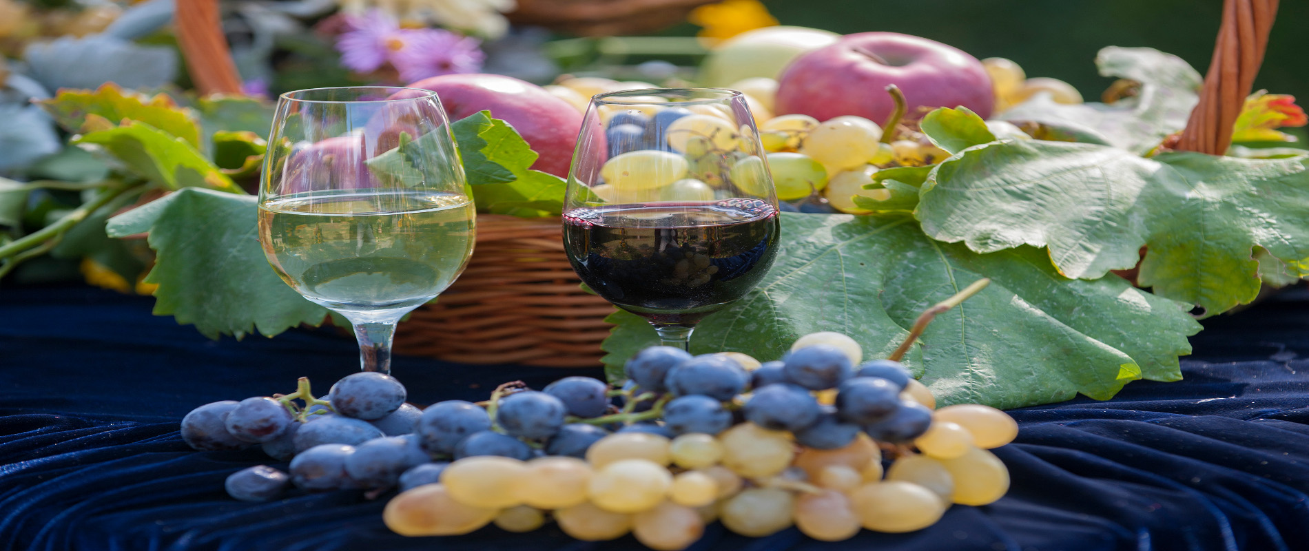 Flavors and scents of Oplenac WINE ROUTE
